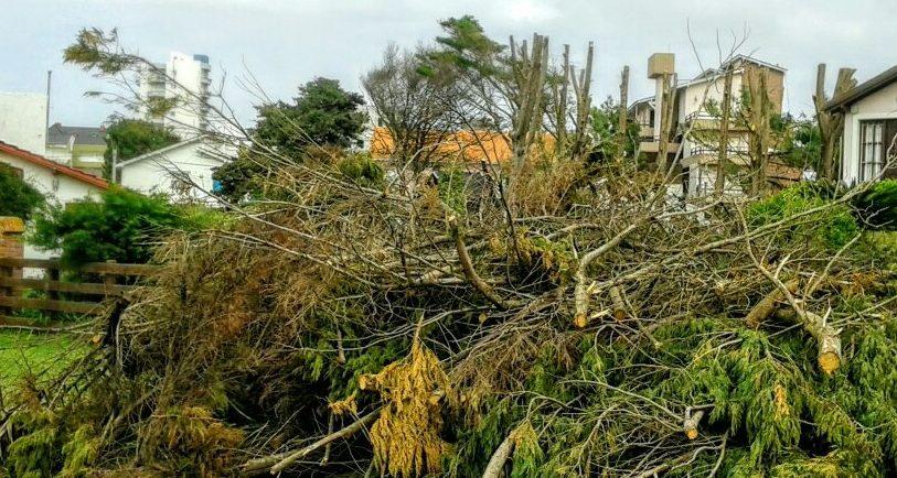 Recolección de ramas y escombros